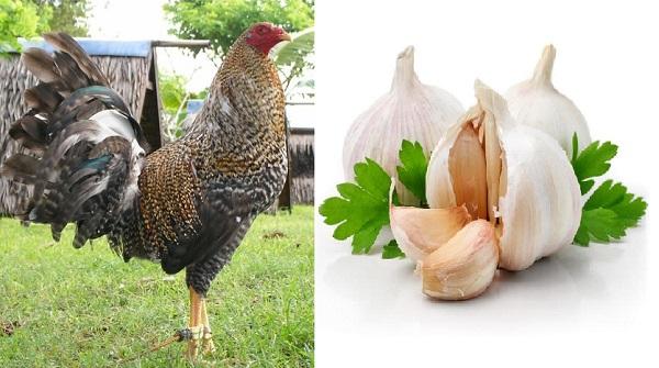 Como Eliminar El Moquillo En Pollos