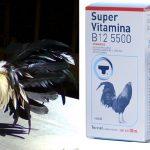 Importancia De las Vitaminas Y Anabolicos Para Gallos De Pelea