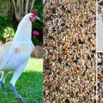 Como Preparar Un Buen Alimento Para Gallos De Pelea
