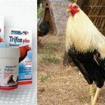 Poderoso Medicamento Desparasitante Para Gallos De Pelea