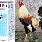El Uso De La Vitamina TopB15+3 De Tornel En Gallos De Pelea