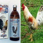 El Uso Del Catarrol Para Curar El Moquillo En Gallos