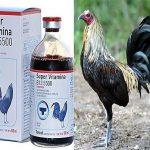 Así Se Usa La Vitamina b12 5500 En Gallos
